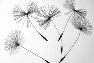Botanical Art - Monthly Series