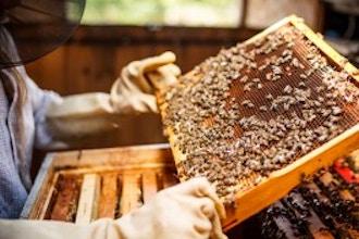 Beekeeping 101: Beginners