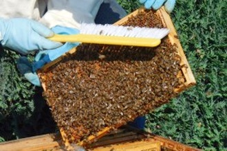 Beekeeping 101 and Beyond