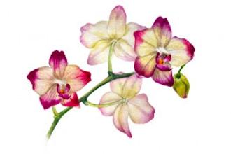 life-skills/botanical-art/aef1fa4e780ee9f164cc21fe5a98e166.jpeg