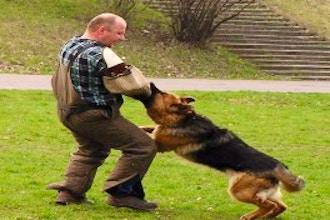 life-skills/dog-training/e0c996c22b7eaebf98486bf950ed4ab9.jpeg