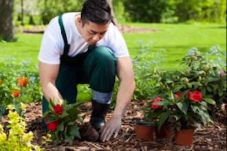 life-skills/gardening/2bd58b68bcbb3f3369ecc3373adb4651.jpeg