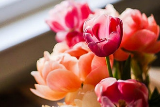 Open House & Spring Flowers