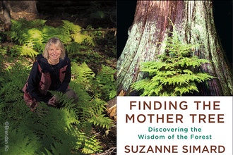 Finding the Mother Tree - Online