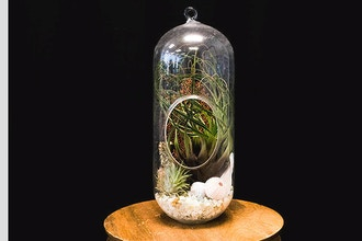 All About Terrariums and Vivariums - Online