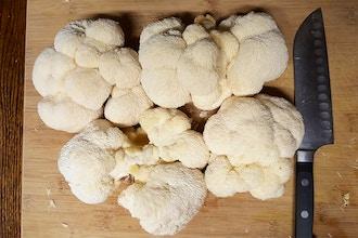Grow Gourmet Mushrooms Indoors