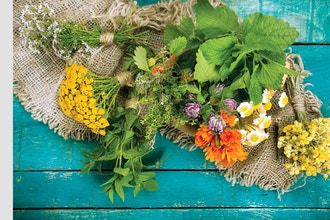 Herbalism: Beyond the Basics