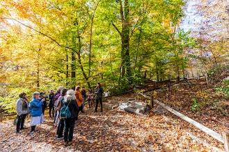 Lead a Nature Walk