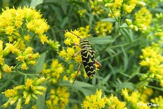 Photographing Pollinators
