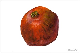 Pomegranates in Dry Brush Watercolor - Online