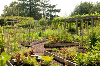 Raised Bed Gardening - Online