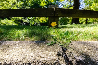 Urban Flora: Growing Between the Cracks - Online