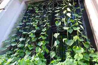 Incredible Vertical Gardening Vines And Climbers Gardening Classes New York Coursehorse New York Botanical Garden Short Links Chair Design For Home Short Linksinfo