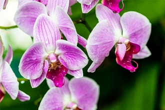 Orchids for Beginners - Online