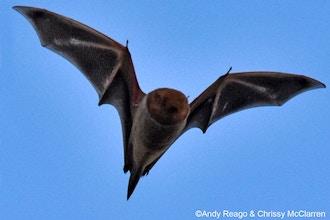 Night Callers: Bronx Bats