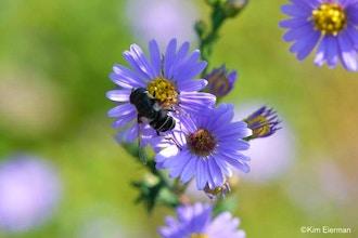 The Native Pollinator Garden - Online