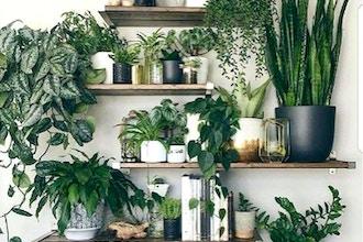 Houseplant Design Workshop - Online