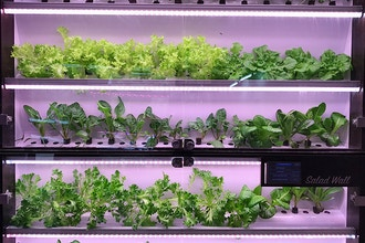 Introduction to Hydroponics - Online
