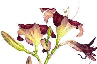 Lilies in Watercolor Workshop