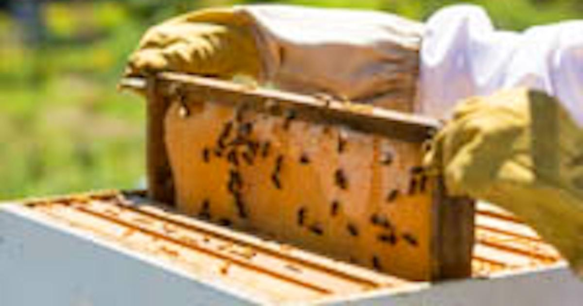 Beekeeping Basics Beekeeping Classes New York Coursehorse