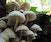 Mushrooms & Mycorrhizae