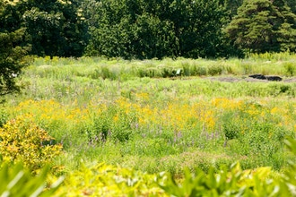 Gardening with Native Plants - Online