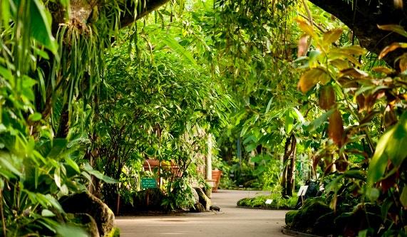 new york botanical garden - Garden Life