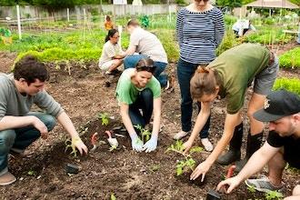 Organic Gardening Basics - Online