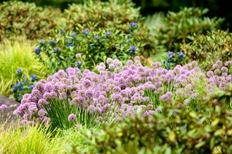 Basic Color Theory for Gardeners