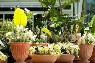 All About Containers: The Very Best for Plants for Pots