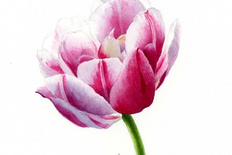 Spring Tulips in Watercolor Workshop
