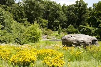 A Four-Season Native Garden