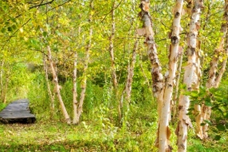 Naturalistic Landscape Design
