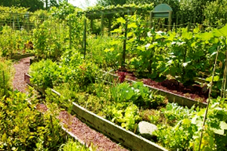 A Kitchen Garden Plan
