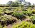 Basic Botany for Gardeners