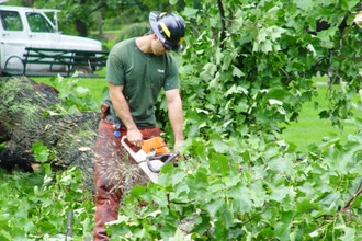 Chainsaws: Use, Safety, and Maintenance - Online