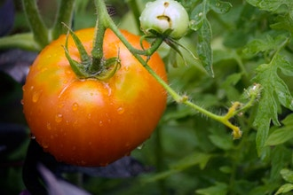 Get More From Your Vegetable Garden