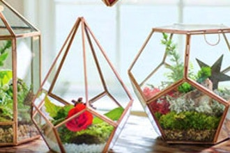 Living Decor: Succulents, Stones & Moss Geodesic Dome
