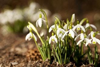 Wake Up Your Garden: Spring Gardeners Task List