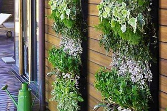 Intro to Green Walls
