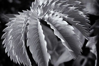 Introduction to Black & White Photography