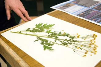Pressing Plants for Art & Science