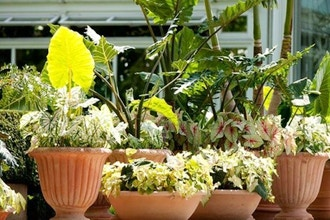 All About Containers: Guide to Gardening Resources