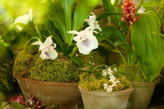 Apartment Gardener's: Creating an Indoor Garden