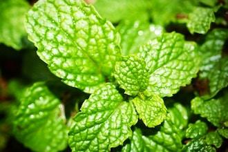 Apartment Gardener's Saturday: Growing Herbs Indoors