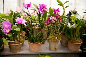 Desktop Orchids