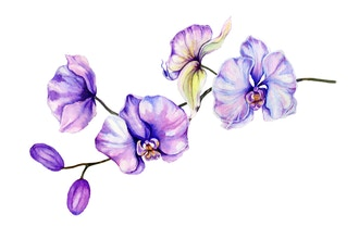Orchid Flowers in Watercolor - Online