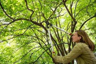 Pruning: How, When, and Where