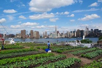 Rooftop Gardening - Online