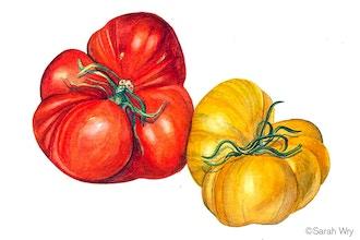 Tomatoes Watercolor Workshop